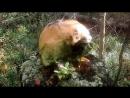 место встречи грибника и медведя