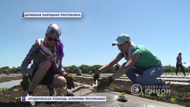 Студенческая помощь аграриям Республики. 18.06.2018, Панорама
