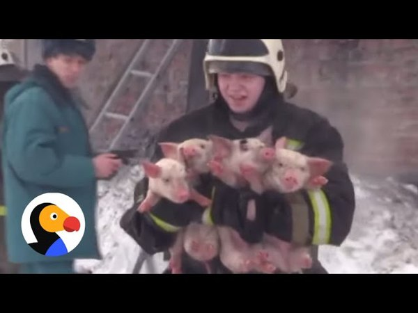 Firefighters Risk Lives To Save Animals Compilation | The Dodo