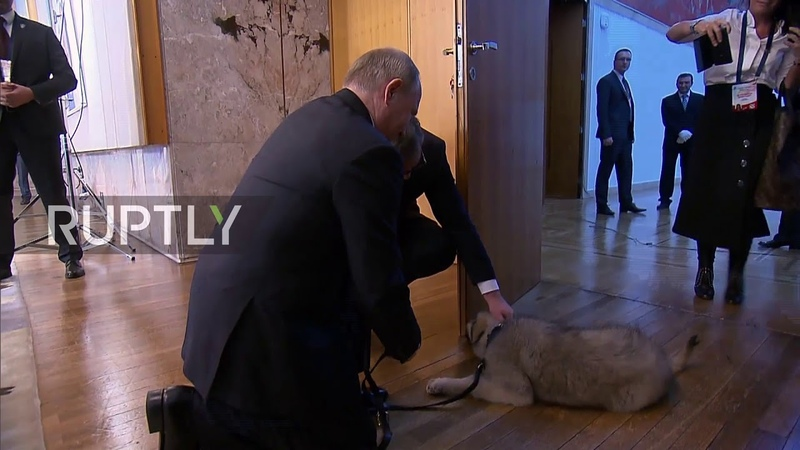 Puppy love! Serbian president gives Putin new pooch