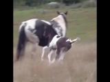 Foal runs into mom.