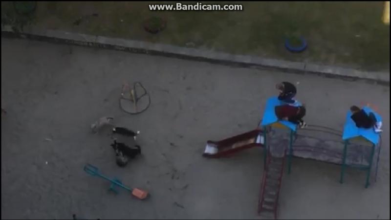 Собачки граються з дітьми на дитячому майданчику