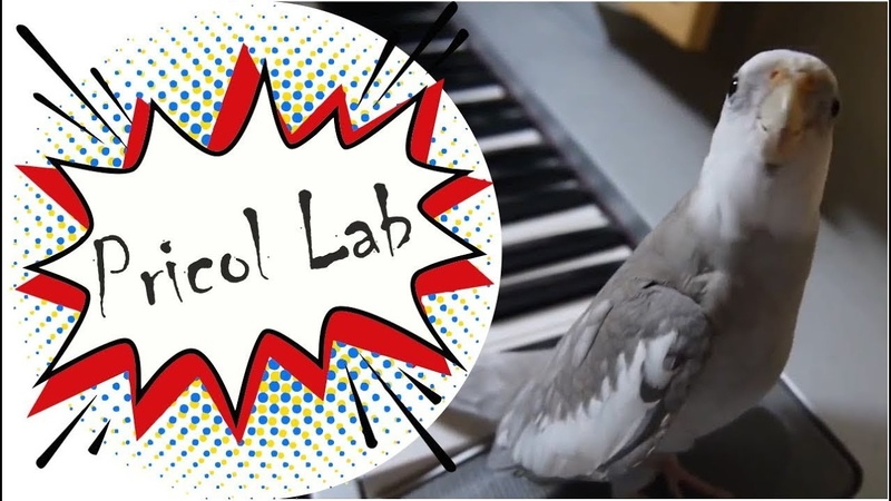 Попугай корелла смешные видео про попугаев до слез!