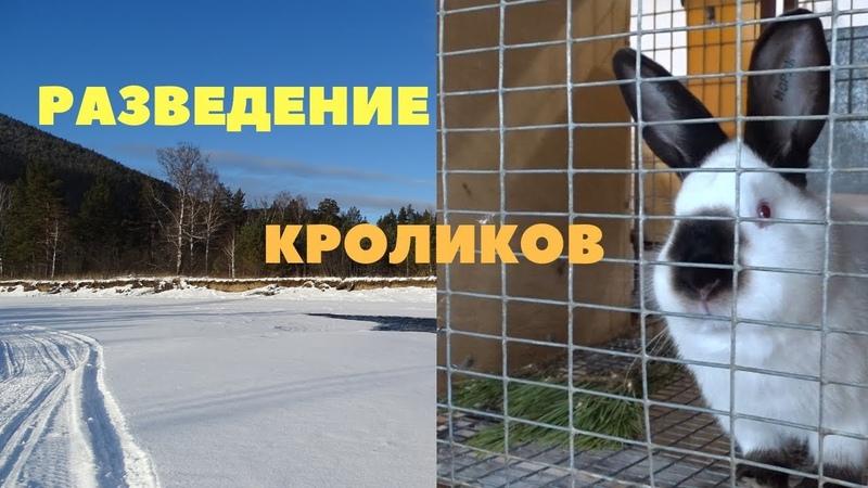 Технология разведения кроликов спаривание, сукрольность, окролВыкармливание и отсадка крольчат