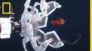 See a New Robot That Captures Sea Creatures Gently National Geographic
