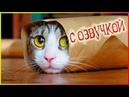 Приколы с котами – озвучка животных – Попробуй не засмеяться от Domi Show