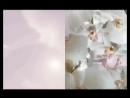 Calvin Klein Euphoria Blossom