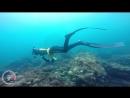 Terceira diving