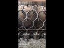 Изготовление сетки Рабица