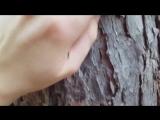 Asmr wood