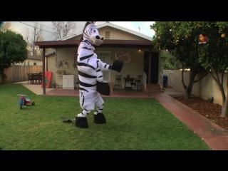 танцующая зебра_480p.mp4