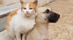 Сирийский электрик Мохаммед Джалил за время боевых действий спас в своём приюте более 100 котов. Он отказывается оставить их даже в самые горячие и опасные для жизни дни.