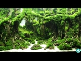 The_Forbidden_Forest_by_Yoyo_Prayogi_6th_IAPLC_2016_.mp4