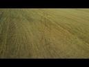 Syma X5C. 03082018.Мордовия,автодорога Саранск-Ковылкино,Ковылкинский район,с.Кочелаево.Жнива