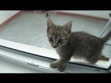 Кузя против кабачка. смешное видео. коты на Сахалине нынче суровые