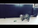 огурцы главные враги человечества и котов.mp4