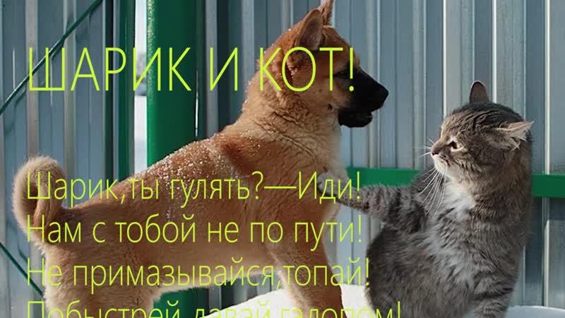 Шарик и КОТ