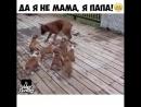 Legion Dogs собаки питбуль питбультерьер стафорд собака друг человека
