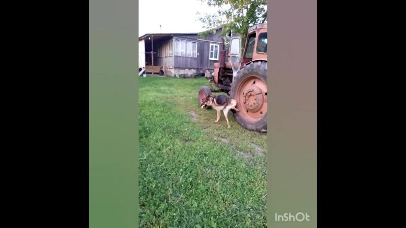 Наглый пёс.