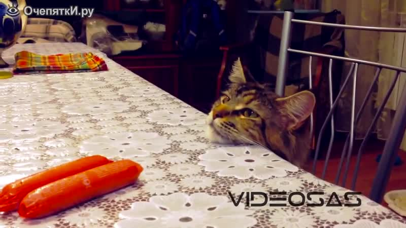 Две сосиски на столе