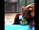 Бурый медведь Буян делает прогноз на финальный матч Чемпионата Мира по футболу 2018.