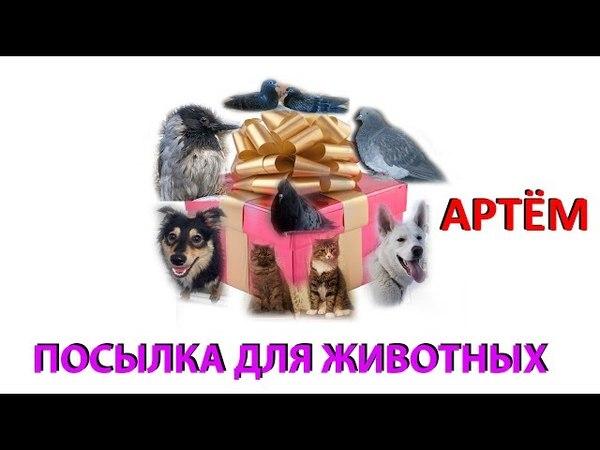 Посылка для животных. АРТЁМ (Екатеринбург)