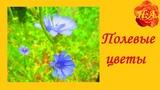 Полевые цветы Разнотравье Красота