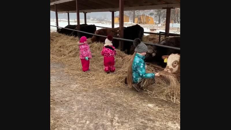 Детский труд - это и пример для взрослых, и залог здорового воспитания. фермерскиепродукты отдыхвдеревне лукино воспитаниеде