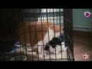 Территория добра - Кошачья пара ждёт новых хозяев