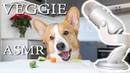 CORGI DOGS FIRST ASMR - Topi the Corgi