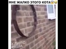 стрёмный кот