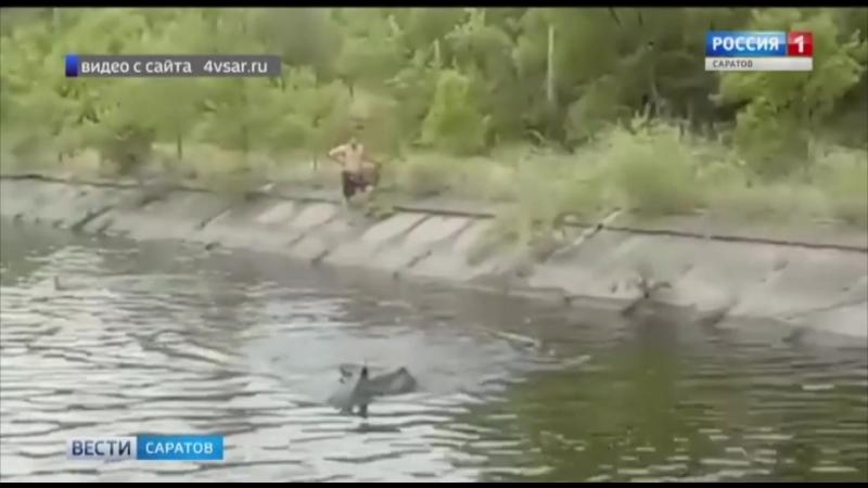 Спасатели вызволили лося, провалившегося в воду