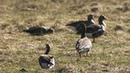ВКостромской области находится город курорт для перелетных птиц Новости Первый канал