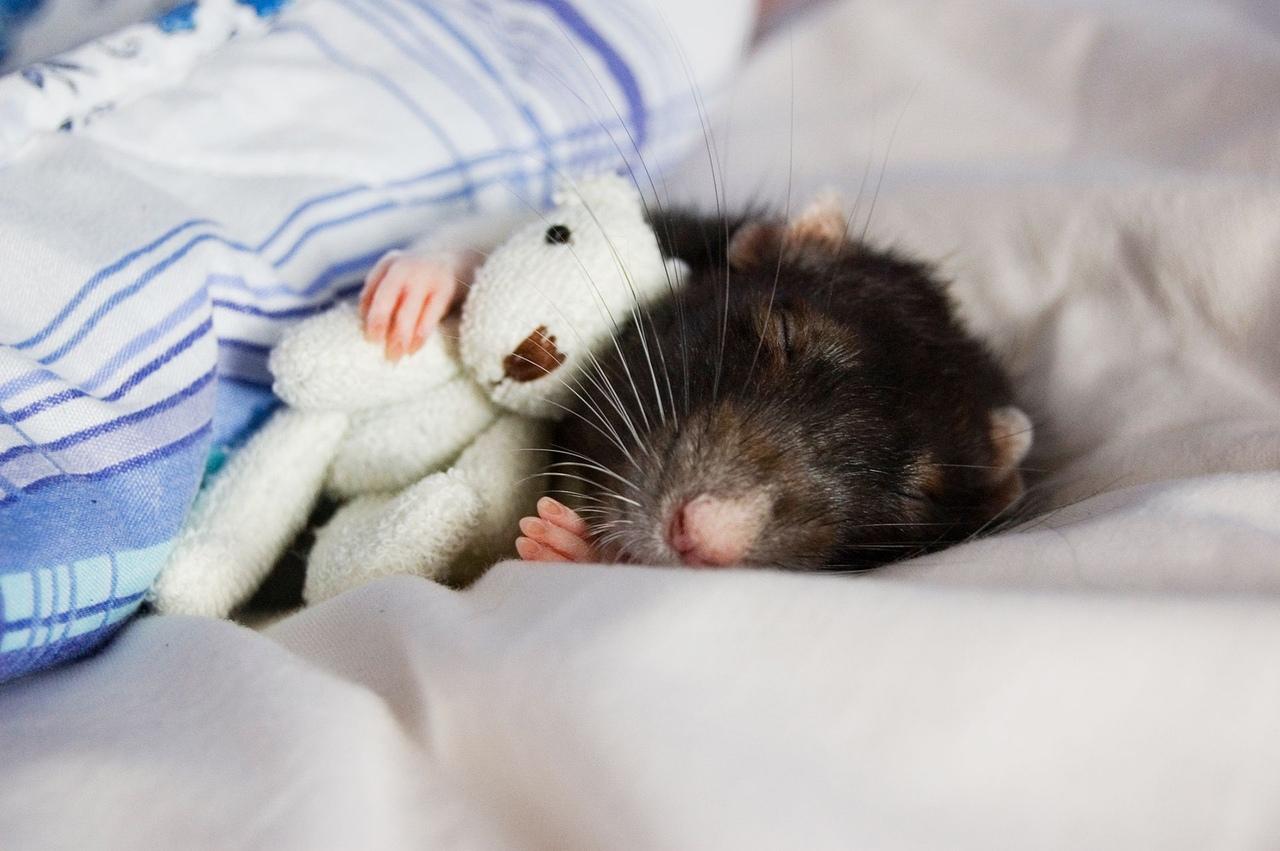 Спокойной ночи картинки животные прикольные, надписями