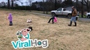 Dogs Lead Ducks Through Tricky Obstacle Course ViralHog