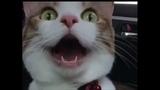 Cat &amp Katya Clover