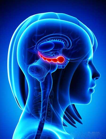 Гиппокамп связан с закреплением личных воспоминаний и их эмоций.