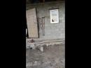 бляяятььььь пёс