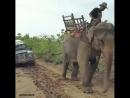 Слон и машина