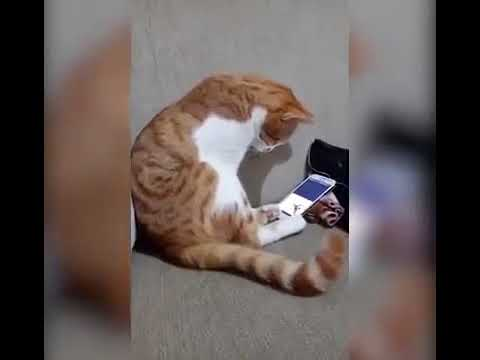 Кот растрогал пользователей Сети реакцией на видео с умершим хозяином