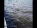 Плещеево озеро )