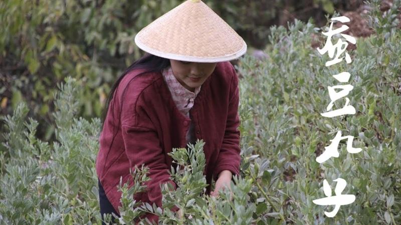 云南舂菜:用新鲜蚕豆仁和茴香舂制成香甜的蚕豆丸子【滇西小哥】