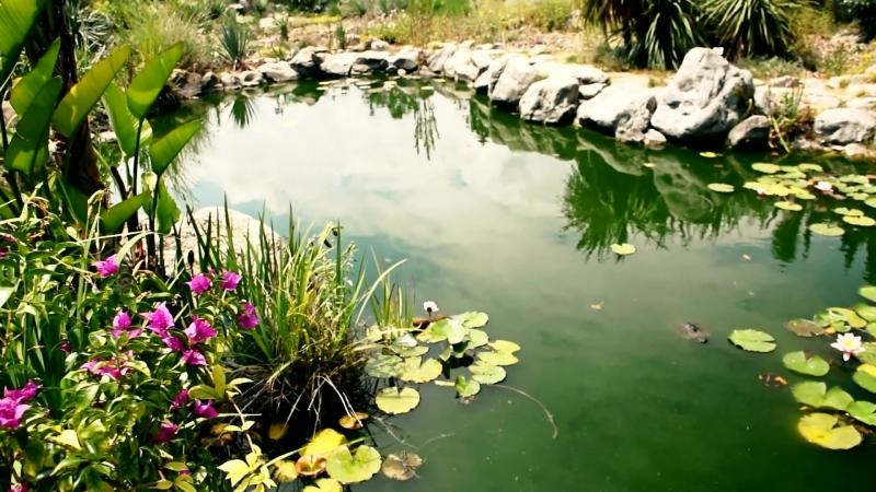 Крым 2018 - Ботанический сад. Парк Монтедор