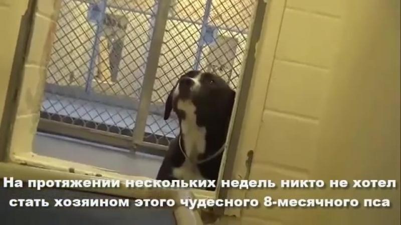 Радости пса не было предела когда его забирали из приюта