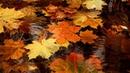 Здравствуй Осень Трогательная песня Пётр Давыдов Hello autumn