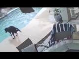 Пёс бросился в воду, чтобы спасти своего тонущего друга