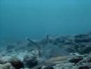 1990 Андаманские острова Невидимые острова - Подводная одиссея команды Кусто
