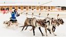 Лучшие оленеводы Югры пересядут с нарт на снегоход