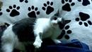 Приколы с котами Злая кошка Масяня · coub, коуб