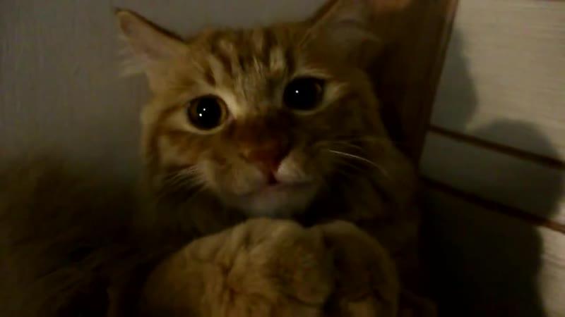 Котэ торчит от пылесоса хорошее настроение юмор смешное домашнее видео любительская съемка дом домашний зверь киса котэ